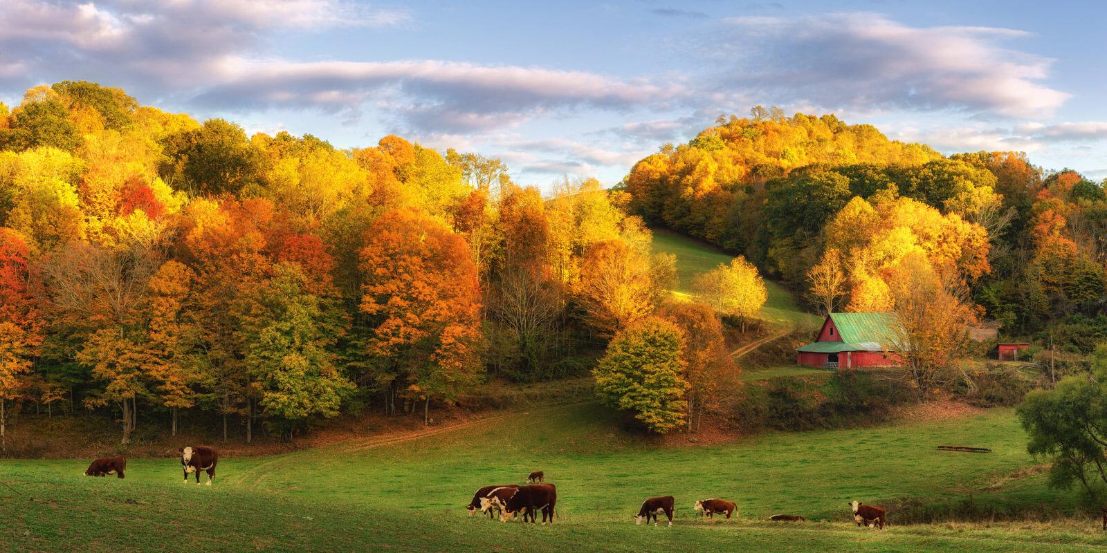 Lewisburg TN Landscape